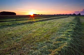 Sunrise over green haymaking — Stock Photo