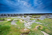 Blue clouded sky over coast mud at low tide — Stock Photo