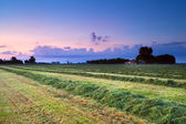 Hay on field at sunrise — Stock Photo