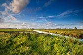 Dutch farmland in sunny day — Stock Photo