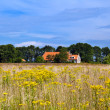 Farmhouse and yellow wildflowers field — Stock Photo