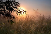 Morning sunshine, winmdill silhouette and fog — Stock Photo