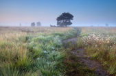 Path in misty summer morning — Stock Photo