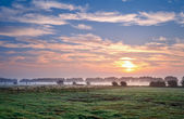 Summer sunrise over pastoral — Stock Photo