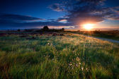 Sunbeams over swamps — Stock Photo