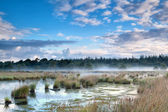 Mist over swamp in the morning — Stock Photo