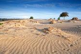 Wind texture on sand dunes — Stock Photo