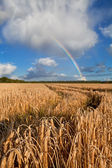 Rainbow over wheat field after rain — Stock Photo