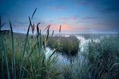 Misty swamp at sunrise — Stock Photo