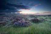 Alba sopra la palude con fioritura heather — Foto Stock