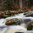 Mountain river in forest — Stock Photo