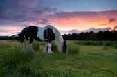 Horse grazing on pasture at sunset — Stock Photo