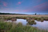 Swamp in dusk — Stock Photo