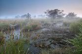 Pântano e manhã denso nevoeiro — Fotografia Stock