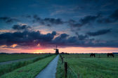 Dutch windmill and horses on pasture — Stock Photo