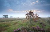 Orange rowan berry tree in the fog — Stock Photo
