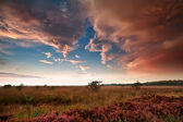 Heavy rainy clouds over swamp at sunset — Stock Photo