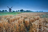 Wheat field and windmill, Groningen, Holland — Stock Photo