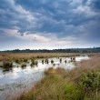 Stock Photo: Clouded sky over swamp