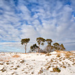 Pine trees on hill covered with snow over blue sky — Stock Photo