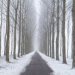 Bike path between frosted tree rows in fog — Stockfoto