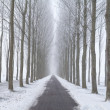 Bike path between frosted tree rows in fog — Foto Stock