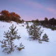 Stock Photo: Twilights in winter coniferous forest