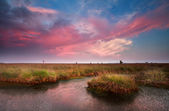 Dramatic pink sunset over bog — Stock Photo