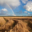 Stock Photo: Rainbow after summer rain over wheat field