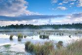 Morning mist over bog — Foto Stock