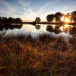 Star sunbeams over wild lake at sunset — Stock Photo
