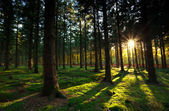 Warm sunbeams in autumn forest — Stock Photo