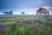 Rowan berry tree on morning marsh — Foto de Stock
