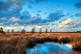 Blue sky reflected in bog water — Stock Photo