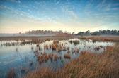 Золотой Осенний рассвет над болото — Стоковое фото
