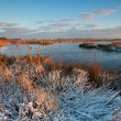 Morning sunlight over winter swamp — Stockfoto