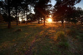 Sunset beams in the forest — Stock Photo