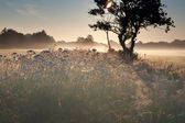 Summer misty sunrise on meadow — Stock fotografie