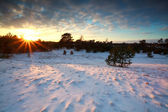 Winter sunset over snowy meadows and forest — Stock fotografie