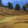 Alpine meadows in Bavaria — Stock Photo