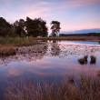 Little wild pond at sunset — Stock Photo