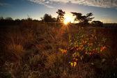Sunbeams over marsh at sunrise — Stock Photo