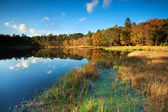 Little lake in autumn forest — Stock Photo