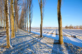 Shadow of tree rows on snow — Stockfoto