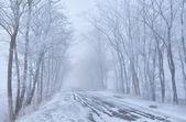 Träd rader och landsbygden road i frost — Stockfoto