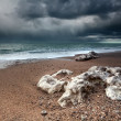 Storm over Atlantic ocean coast — Stock Photo
