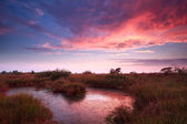 Purple sky during sunrise over bog — Stock Photo