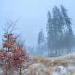 Foggy morning in winter Harz mountains — Stock Photo