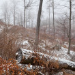 Winter foggy day in forest — Stock Photo #39107719