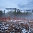 Harz mountains during misty winter day — Stock Photo